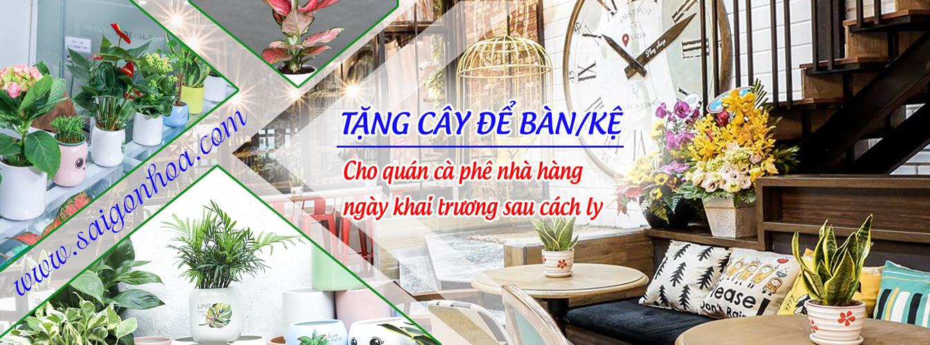 tang-cay-de-ban-ke