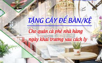 tang-cay-de-ban