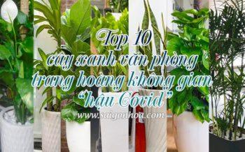 Top 10 Cay Xanh Van Phong
