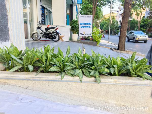 Trang Tri Bon Cay