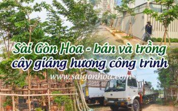 Ban Va Trong Cay Giang Huong
