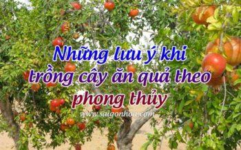 Cay An Qua Phong Thuy