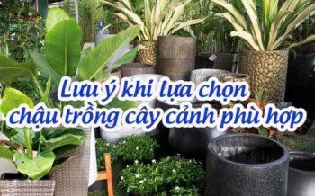 Chon Chau Trong Cay Phu Hop