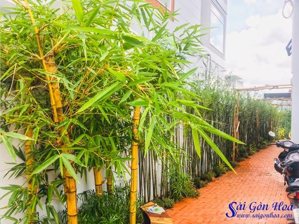 5 Kiểu Thiết Kế Sân Vườn Sử Dụng Tre Trúc Tuyệt Đẹp