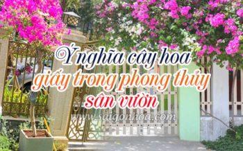 Y Nghia Phong Thuy Hoa Giay