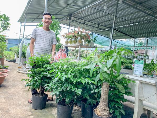 Cung Cap Cay Hanh Phuc