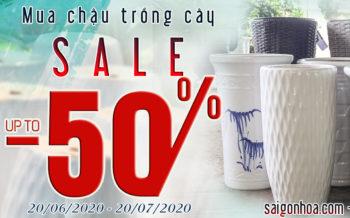 Sale Chau Trong Cay