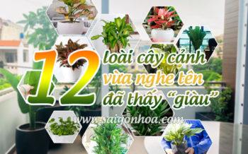 12 Loai Cay Canh Giau Co