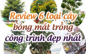 6 Loai Cay Bong Mat Cong Trinh