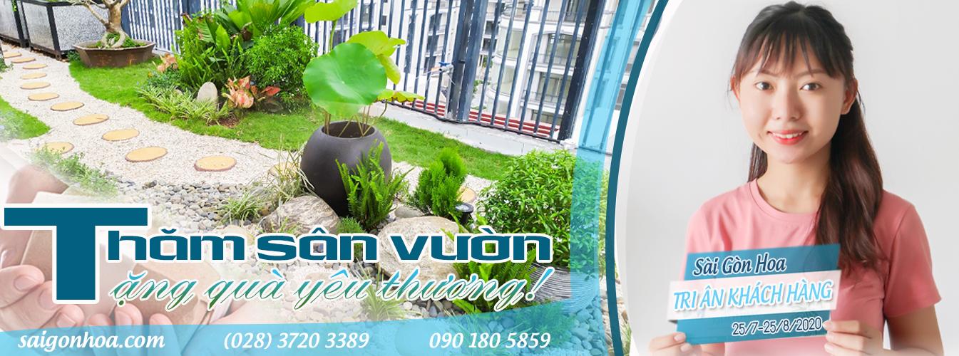Banner Tham San Vuon
