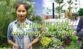 Cac Tieu Chi Chon Cay Cong Trinh