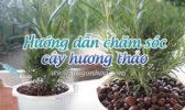 Cham Soc Cay Huong Thao