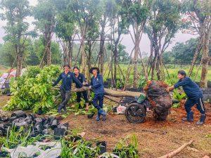 Doi Ngu Thi Cong Sai Gon Hoa