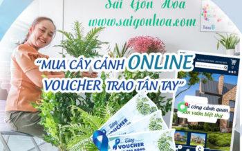 Mua Cay Canh Online Nhan Voucher
