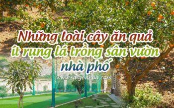 Nhung Cay An Qua It Rung La