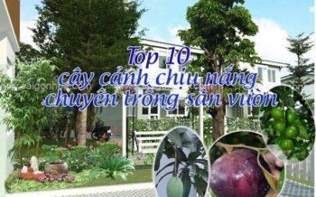 Thiet Ke San Vuon Biet Thu Nha Chi Dung