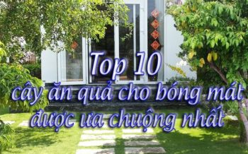 Top 10 Cay An Qua Cho Bong Mat
