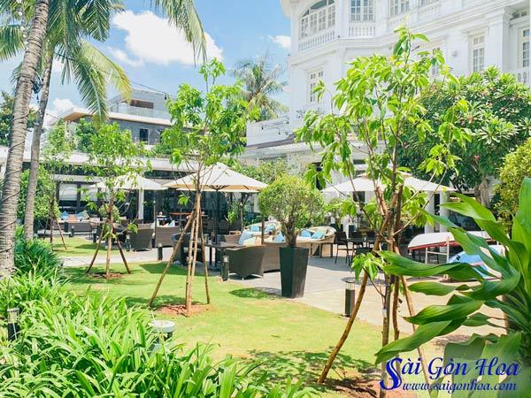 Trong Cay Ngoc Lan Cong Trinh