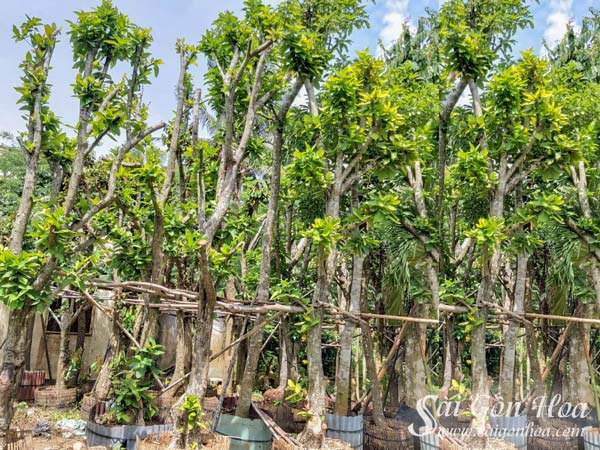 Vuon Uom Cay Man San Vuon