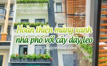 Hoan Thien Mang Xanh Nha Pho