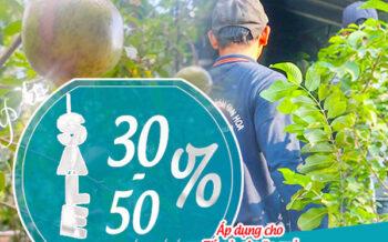 Khuyen Mai 30 50 Cay An Qua