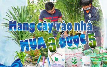 Mang Cay Ve Nha Mua 3 Duoc 5