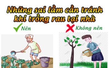 Nhung Sai Lam Can Tranh Khi Trong Rau Tai Nha