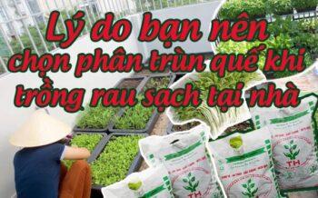 Phan Trun Que Trong Rau Sach