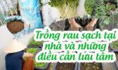 Vuon Rau Sach Tren Ban Cong