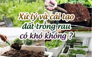 Xu Ly Dat Trong Rau