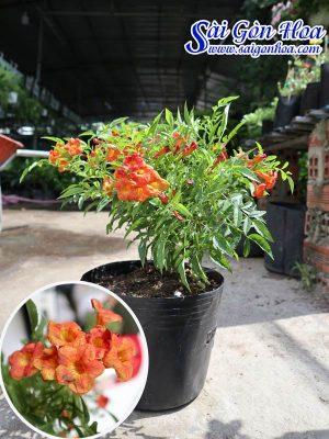 Anh Dai Dien Hoang Lien Cam