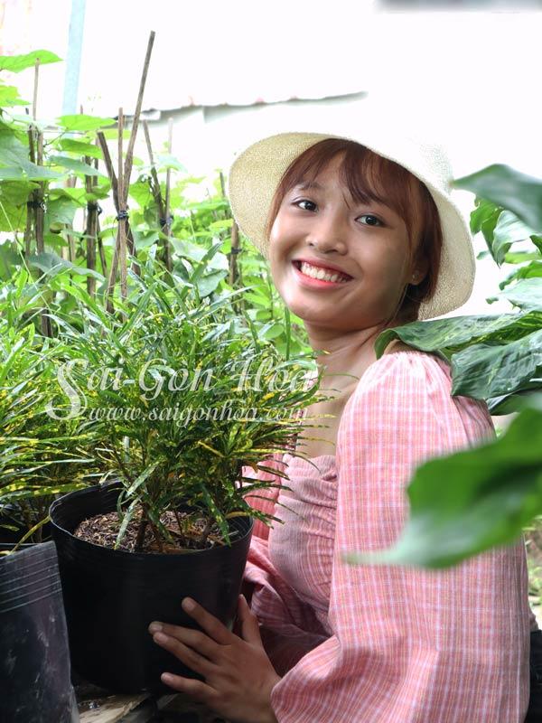 Cay Co Tong Duoi Luon Vang