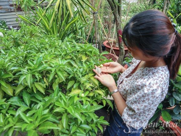Cong Dung Cay Hoa Lai Canh Kep