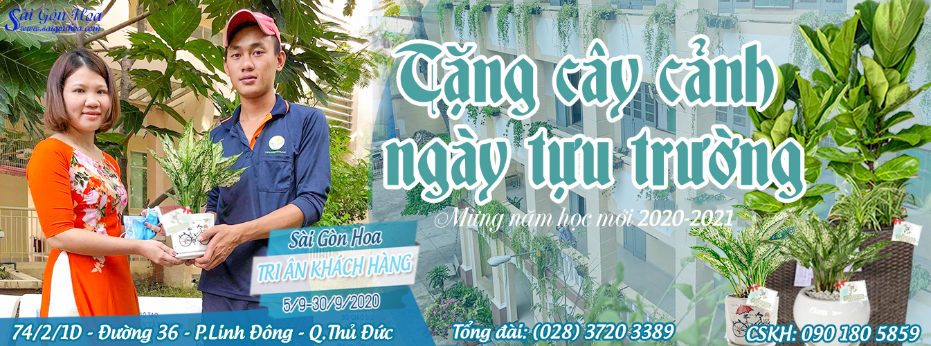 Tang Cay Canh Nam Hoc Moi