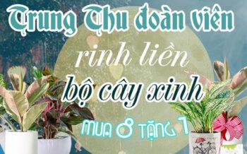 Trung Thu Doan Vien Mua 8 Tang 1
