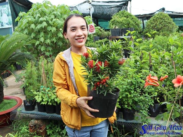 Ban Cay Trang Kim