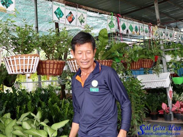 Ban Chau Gia Go Trong Lan