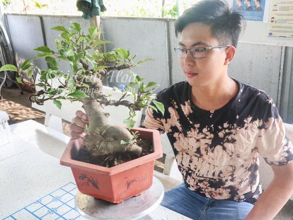 Chau Cay Sung Bonsai Trang Tri