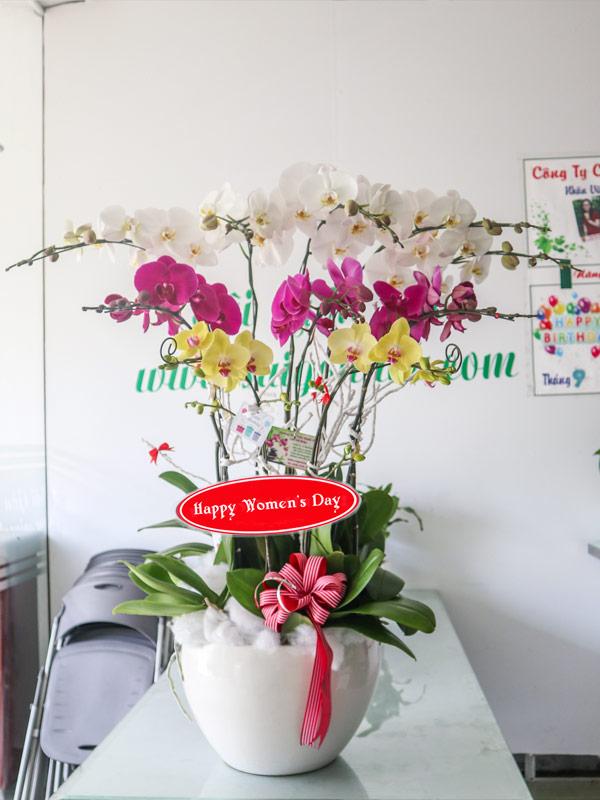 Chau Hoa Lan Ho Diep 10 Canh