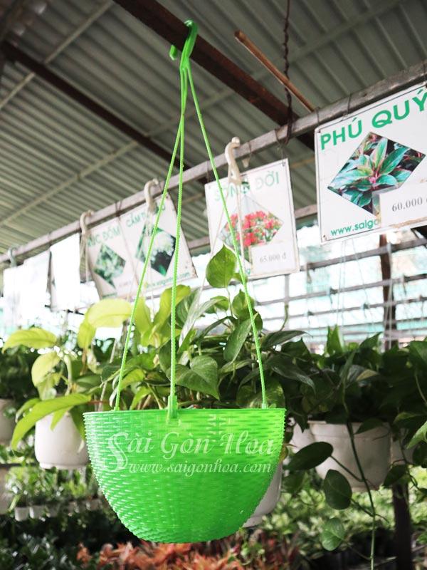 Chau Nhua May Dan Treo