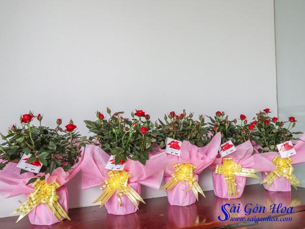 Hoa Hong Goi Giay Qua Tang