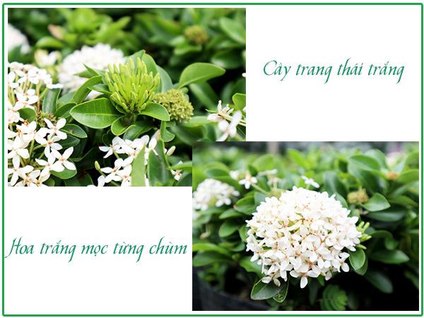 Hoa Trang Thai Trang Dep