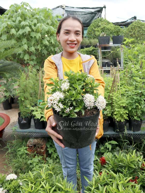 Trang Thai Trang
