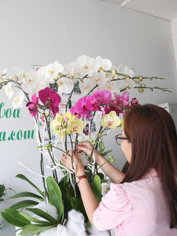 Trang Tri Hoa Lan Ho Diep