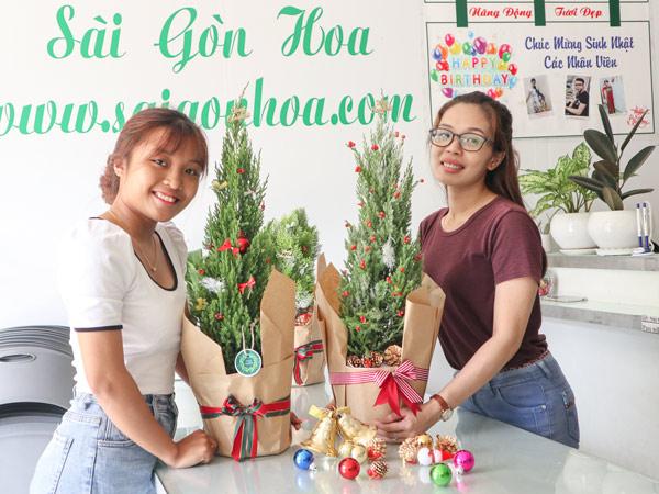Ban Cay Tung But Noel