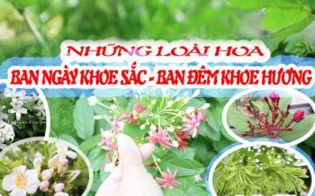 Cay Canh Co Mui Huong