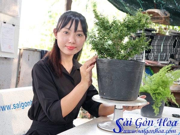 Cay Linh Sam La Ri Dep