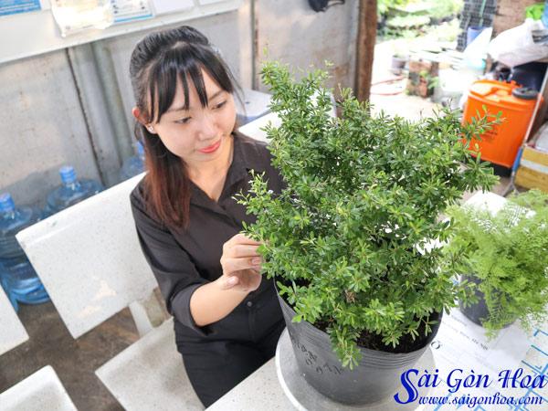 Cham Soc Linh Sam La Ri