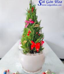 Chau Cay Tung Noel