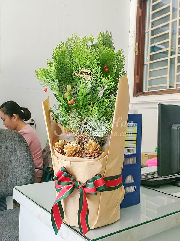 Cong Dung Cay Trac Bach Diep Noel